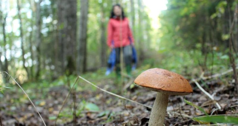 Soomaa mushrooming